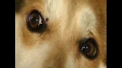 Мима спасена от Deutsch-bulgarische Tierhilfe / Dogville