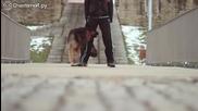 Готина стопанка с чиста съвест може да се гордее дресираното си куче!
