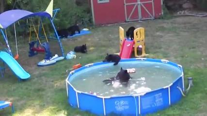 Мечки се забавляват в басейна на къща в Ню Джърси, Сащ