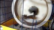 Колко ли електричество може да генерира сладката катеричка Ноби.