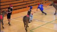 Баскетбол и магарета