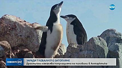 Броят на антарктическите пингвини намалява
