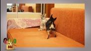 Много нахални котки досаждат на кучета!