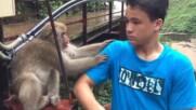 Издивели животни правят смешни неща!
