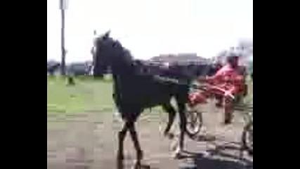 kone resaci v golqnci