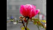 Mehdi - Memories - - -