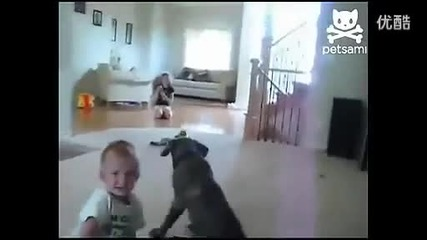 Лудо куче сяда в главата на дете