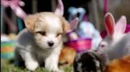 Кученца, пиленца и зайчета празнуват Великден