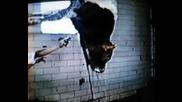 Не Убивайте Животни!