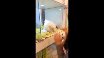 Най-сладкото кученце