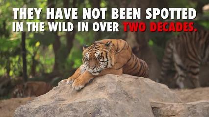 Осем животни застрашени от изчезване през 2016 - а