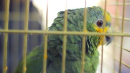 Provideoz - Невъзпитаният папагал