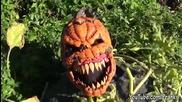 Страшни шеги по Halloween - Компилация