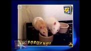 На рояци ком, 06.07.2010, Господари на ефира