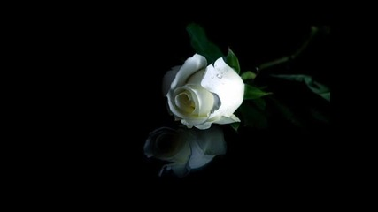 рози и любов