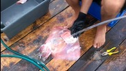 Дране на морска котка (тригона)