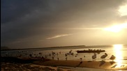 Птичи пристан. Една сутрин на брега във Варна