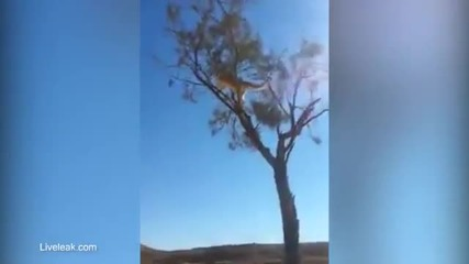 Котка атакува от въздуха дебнещо я куче