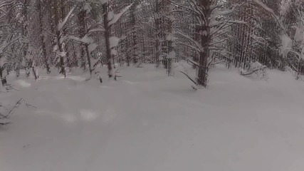 Riding in the woods - Snowboarding
