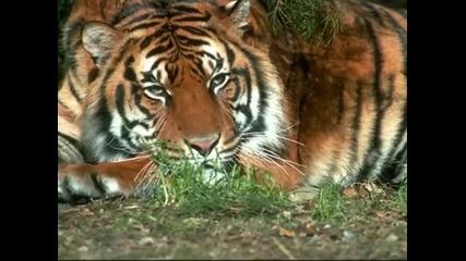 2010 - годината на тигъра