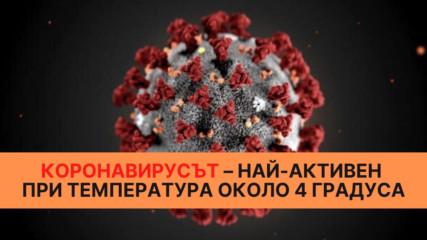 Коронавирусът – най-активен при температура около 4 градуса