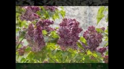 Моцарт - Вальс цветов