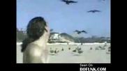Птиците си отмъщават
