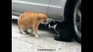 Котка се кара на друга котка (100 смях )