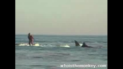 Сърфист яхва акула