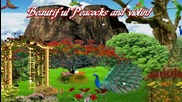 ** Beautiful Peacocks and violin! ... (painting and pictures) **