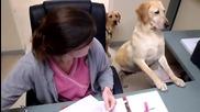 Куче разнася документи..