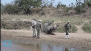 Texan Who Paid $350,000 Kills Endangered Black Rhino