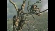 Маймуни Правят ...