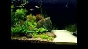 My Rainbowfish