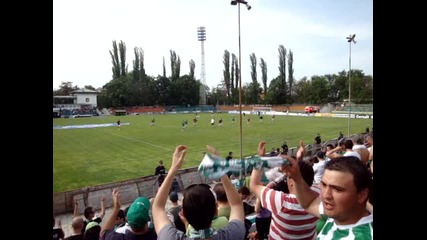 Beroe fans