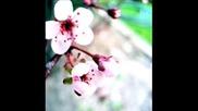 Airhustlers - Flowers From Heaven (dennis Sheperd Remix)