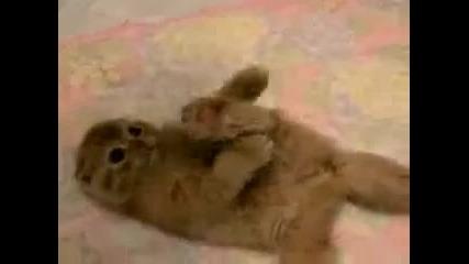 Най-сладкото Коте На Света