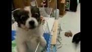 Дали е Възможно Кученце да Казва Елмо Супер Смешно