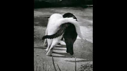da weasel - nunca me deixes