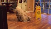 Куче под пълно прикритие