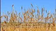 Като дарено зърно на тази Земя - стих, пожелание