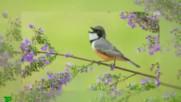 А птиците пееха, пееха! ... ( Alain Morisod * Sweet People)