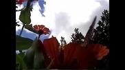 Borboletas e flores