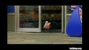 Гларус краде чипс от магазин