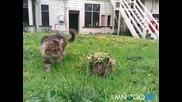 Маскирано коте - как го стресна само !