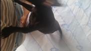 Ели иска на разходка ; ))