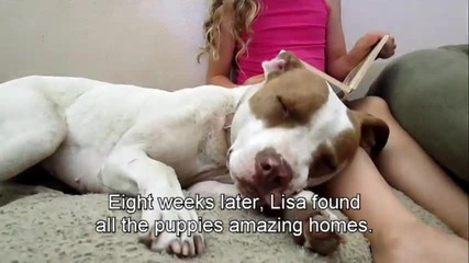 Бременно куче изоставено на улицата получава помощ!