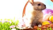 Paste - Fericit - 2017 Весел Великден!