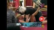 Вечерното шоу на Азис - демонстация на секс поза -=Господари на ефира 03.04.2008=-