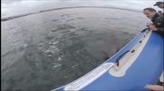 Акула разкъсва надуваема лодка